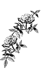 rose,flower,decoration,ornament,border,frame,line art,clip art,scrapbook,coloring book,nature,black and white,b & w
