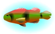 fish,ocean,lake,sea,animal,colourful