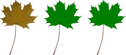 maple,leaf,nature,green
