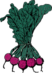 plant,vegetable,beet,media,clip art,externalsource,public domain,image,png,svg,beet,beet