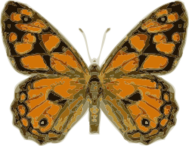 animal,insect,butterfly,media,clip art,externalsource,public domain,image,png,svg