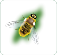 bee,insect,nature,animal,hornet,media,clip art,public domain,image,png,svg