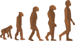 media,clip art,public domain,image,png,svg,evolution,man,human,primate,science,biology