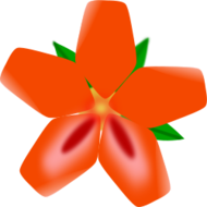 nature,plant,flower,red,media,clip art,public domain,image,svg