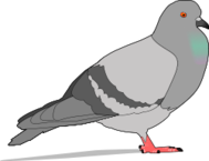 pigeon,bird,animal,city,colour,nature,media,clip art,public domain,image,png,svg