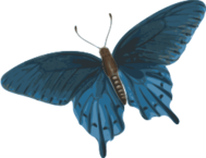 butterfly,papilio,philenor,thomas,say,top,media,clip art,externalsource,public domain,image,png,svg