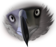 eagle,philippine,face,media,clip art,public domain,image,png,svg,philippine,photorealistic,philippine