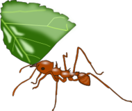 color,animal,ant,atta,insect,media,clip art,public domain,image,svg,png