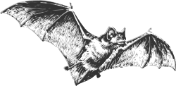 animal,mammal,bat,biology,zoology,line art,black and white,greyscale,contour,outline