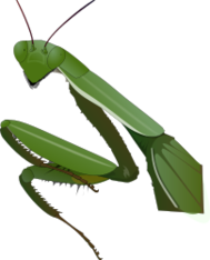 insect,mantis,praying,green,media,clip art,public domain,image,png,svg