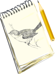 clip art,remix,media,public domain,image,png,svg,sketch,drawing,art,bird,sketchpad,pad,pencil