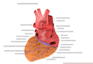 unchecked,human heart,posterior view,medical,anatomy,media,clip art,public domain,image,png,svg