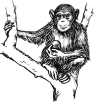 unchecked,animal,mammal,ape,chimpanzee,biology,zoology,outline,line art,grayscale,media,clip art,externalsource,public domain,image,svg,wikimedia common,psf,wikimedia common