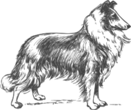animal,mammal,pet,dog,biology,zoology,outline,line art,grayscale,media,clip art,externalsource,public domain,image,svg,wikimedia common,psf,wikimedia common