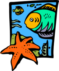 nature,sea,water,underwater,fish,starfish,sea creature