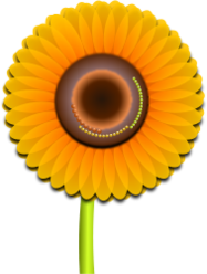 sunflower,flower,nature,beauty