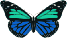 animal,tier,animale,insect,bug,insecte,insekt,insetto,insetti,butterfly,papillon,schmetterling,farfalla,color,colour,couleur,farbe,colore,wing,aile,ala,ale,antenne,antenna,turquoise,blue,bleu,blau,turchese,blu,tier,insekt,schmetterling,farbe,flügel,antenne,schmetterling,türkis