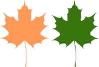 maple,leaf,green,orange,nature,autumn,maple,leaf