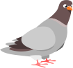 pigeon,cartoon,squab