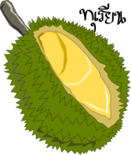 durian,thai fruit,king of fruit,bujung,fruit,durian,thai fruit,king of fruit,fruit