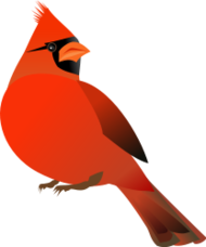 animal,bird,red,cardinal