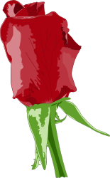 rose,red,plant,garden,vegetable,love,valentine's day,present,gift