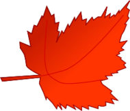 fall,autumn,tree,field,leaf,maple,red maple,shade