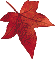 autumn,fall,foliage,forest,garden,leaf,maple,nature,park,red,tree,warm,traced,photorealism