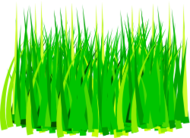 grass,green,paddy,agriculture