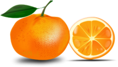 fruit,orange,slice,yummy,food,juicy,photorealistic