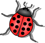 lady bug,bug,insect,animal,beetle,small