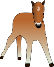 foal,horse,colt,pony,animal,young,cup,little one