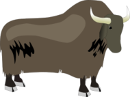 yak,animal,cow,hooved,horned,bovine,long-haired,bos,cattle,grunniens
