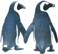 pinguim,pinguim,pinguim,pinguins,pinguins,amor,amour,dia dos namorados,natureza,la