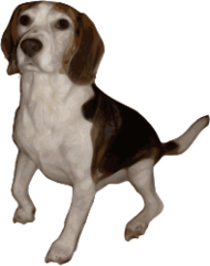 dog,perro,cute,medium,small,puppy,pup,pet,animal,mammal,canine,beagle,pure,bred,breed,hunting,hunt,royalty,traced,pd self