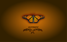 butterfly,bug,wallpaper,background,butterfly
