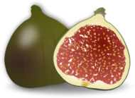 food,fig fruit,ficus,fruit