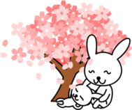cherry blossom,rabbit,animal,cartoon