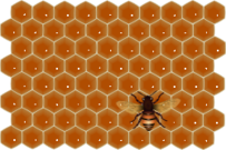 bee,insect,honeycomb,flying,honey,sweet,work,job