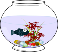 aquarium,fishbowl,fish bowl,fish,belchior,ca,water,ca