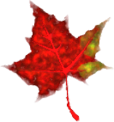 leaf,fall,autumn,red