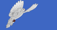 dove,bird,peace dove,sky