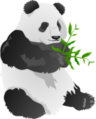 panda,bear,animal,fauna,china,bamboo,black,white,furry,fuzzy,endangered,wwf,wildlife,rare,green,asia