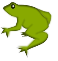 animal,frog,amphibian,green,animal