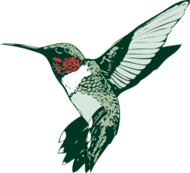 hummingbird,ruby-throated,hummer,bird,hummingbird,ruby-throated,hummer,bird,clipart_issue,hummingbird,ruby-throated,hummer,bird