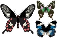 butterfly,buterflies,common,rose,blue,swallowtail,purple,spotted,swallowtail.