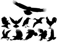 animal,collection,silhouette,bird,flight