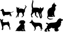 house,animal,pet,cat,dog