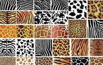 skin,animal,pattern,lion,zebra,tiger,cat,horse,cow,giraffe,creature,element