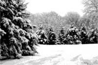 snow,pin,winter,tree,greyscale,vector